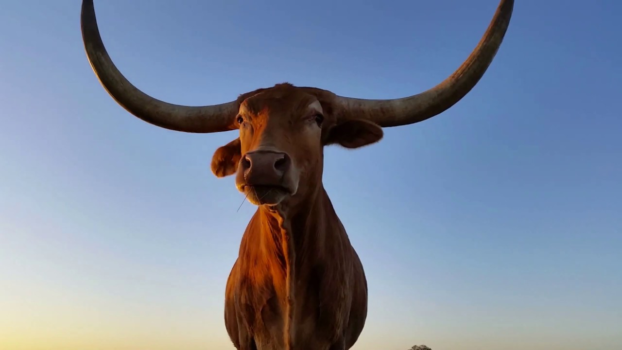 Bitcoin goes to Texas