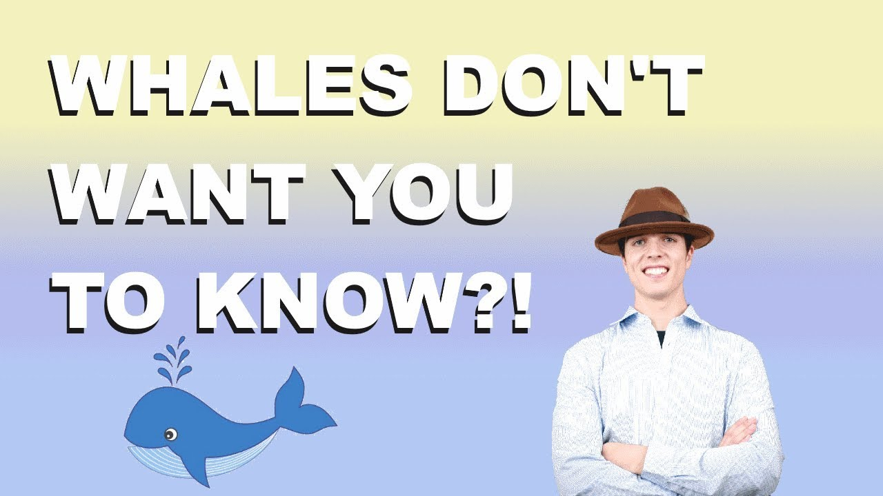 What The Whales Don't Want You to Know?!