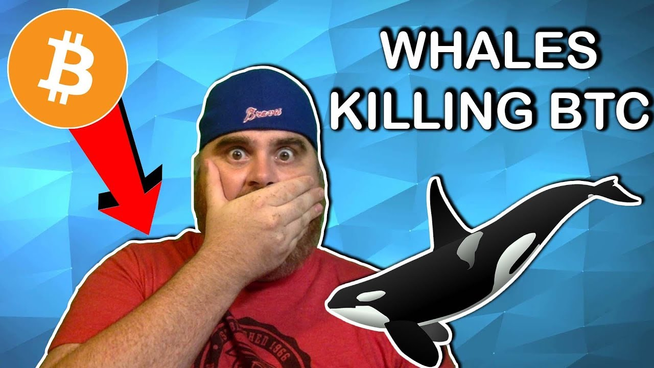 Bitcoin Crashes Due to Whale Price Manipulation?   Crypto News